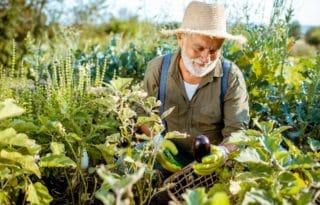 potagers sureleves pour jardinier sans effort