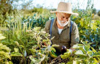 Des solutions de jardinage et de soin des plantes
